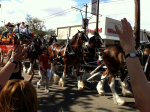 The Budweiser Clydesdales were in the first parade on Saturday