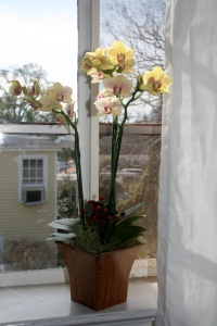 Orchids from Grams